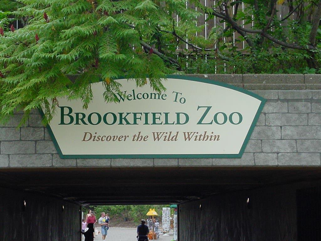 A Day At Brookfield Zoo