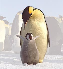 picture of penguin chick and her mother